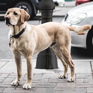 Los conjuntos de alumbrado exterior de ATP están fabricados con materiales poliméricos inmunes a la corrosión causada por los orines de perro.